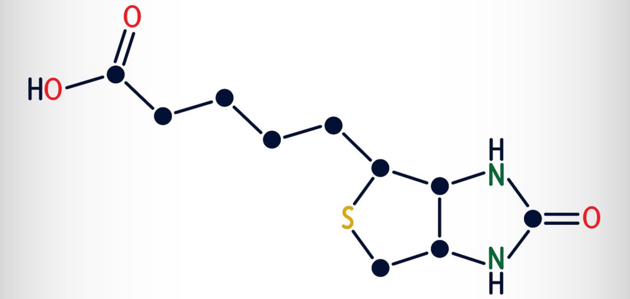 structure chimique de la biotine
