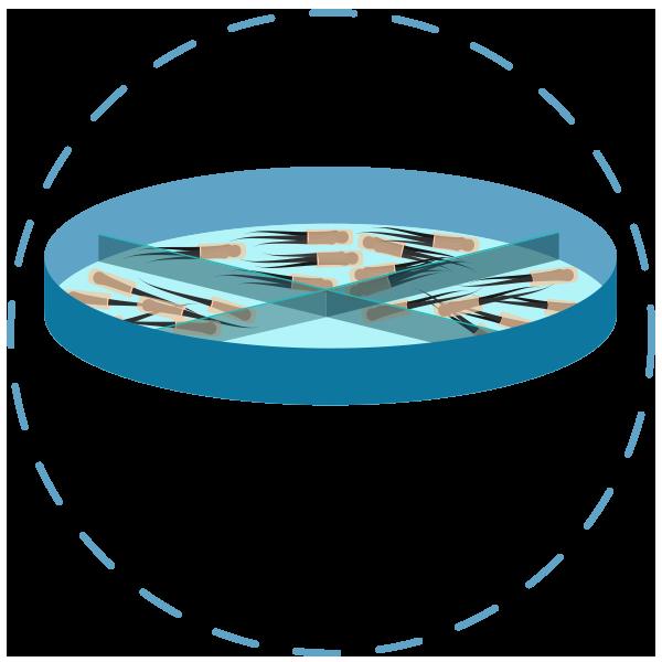 Méthode FUE - stockage