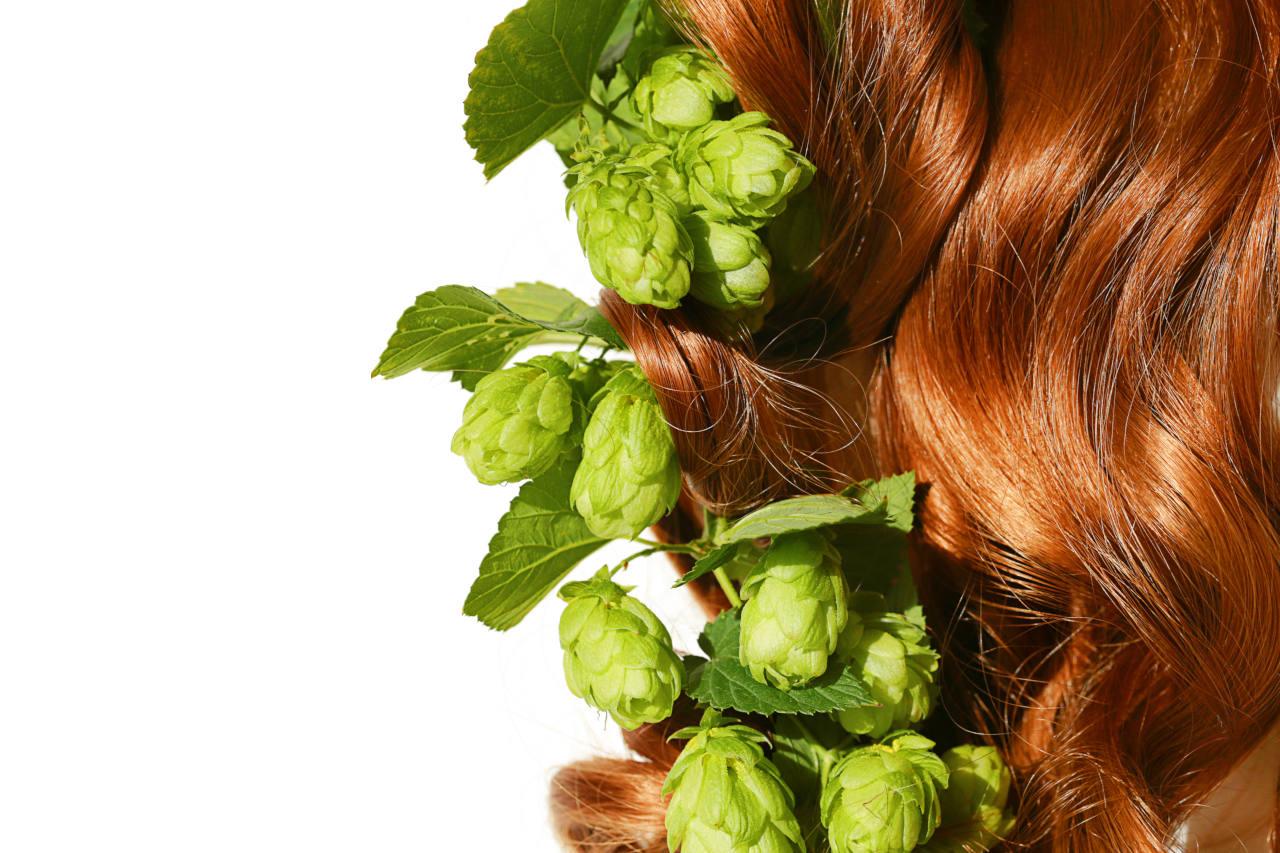 des plantes de houblon accolés à des cheveux roux