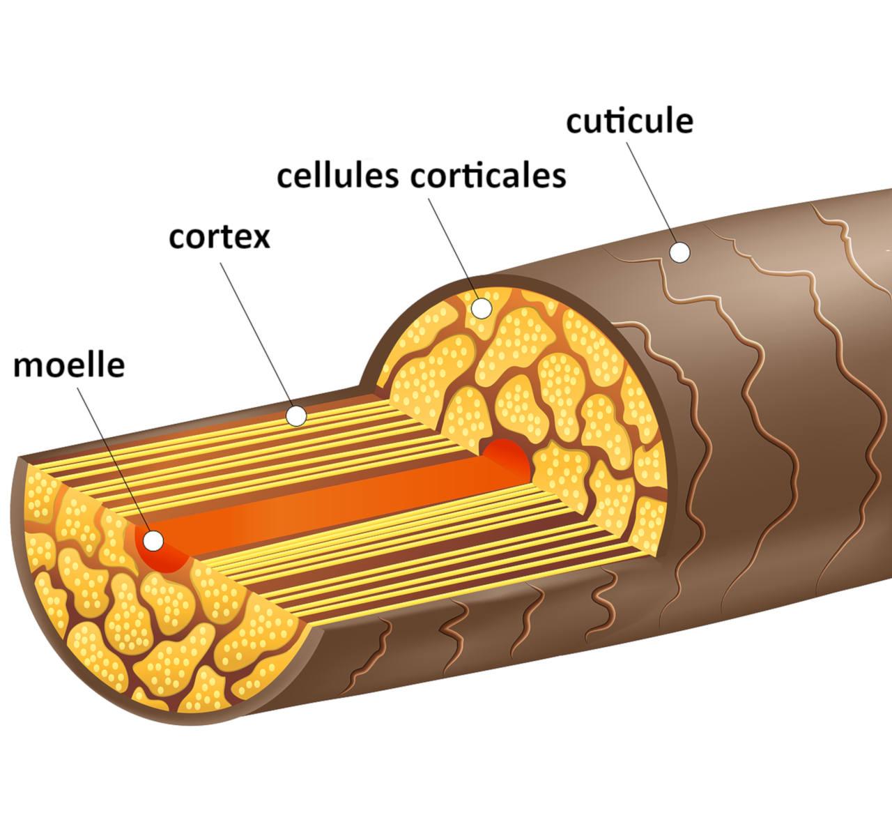 un serum cheveux est ideal pour proteger votre fibre capillaire