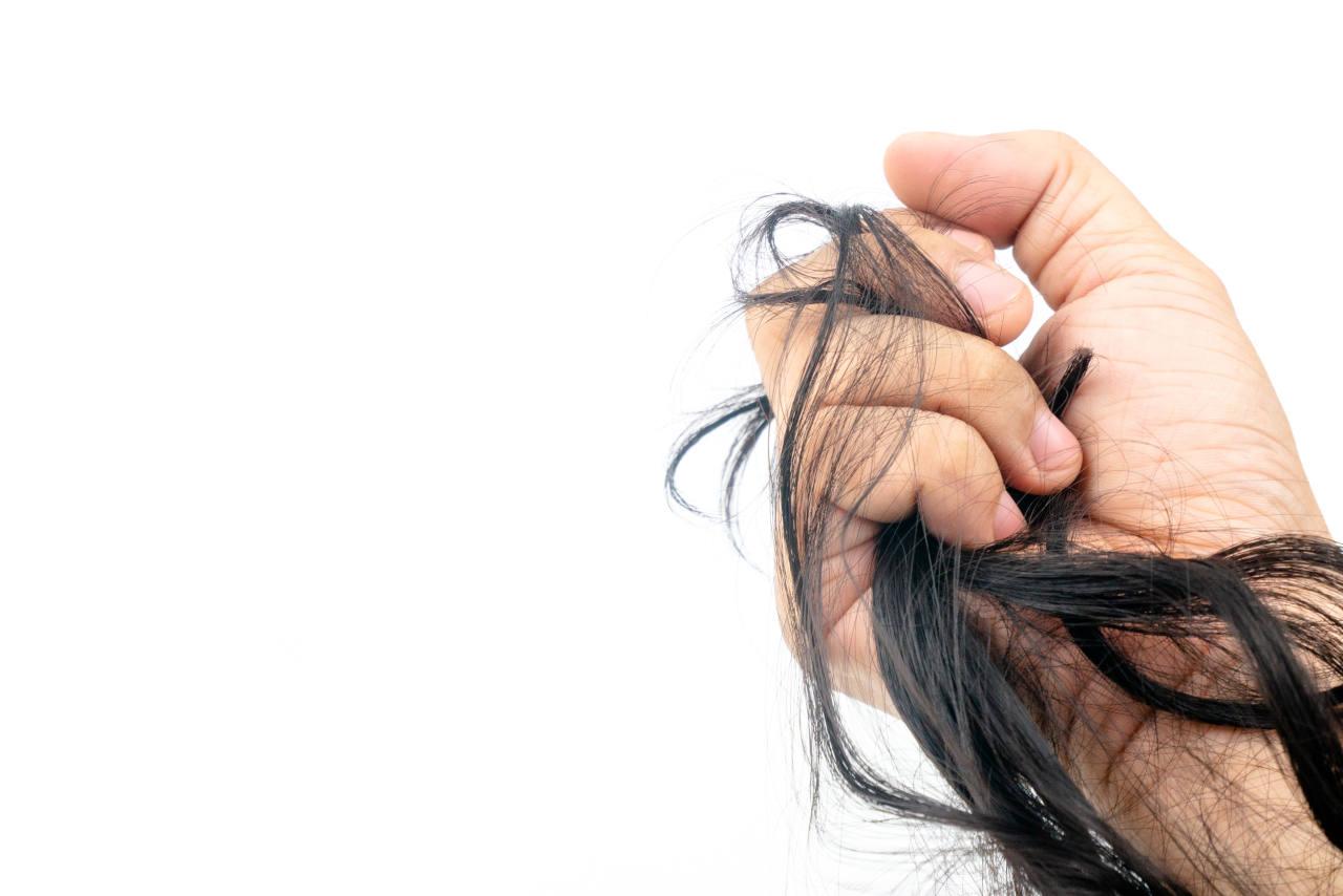 main tenant une mèche de cheveux pour réaliser un test calvitie de traction