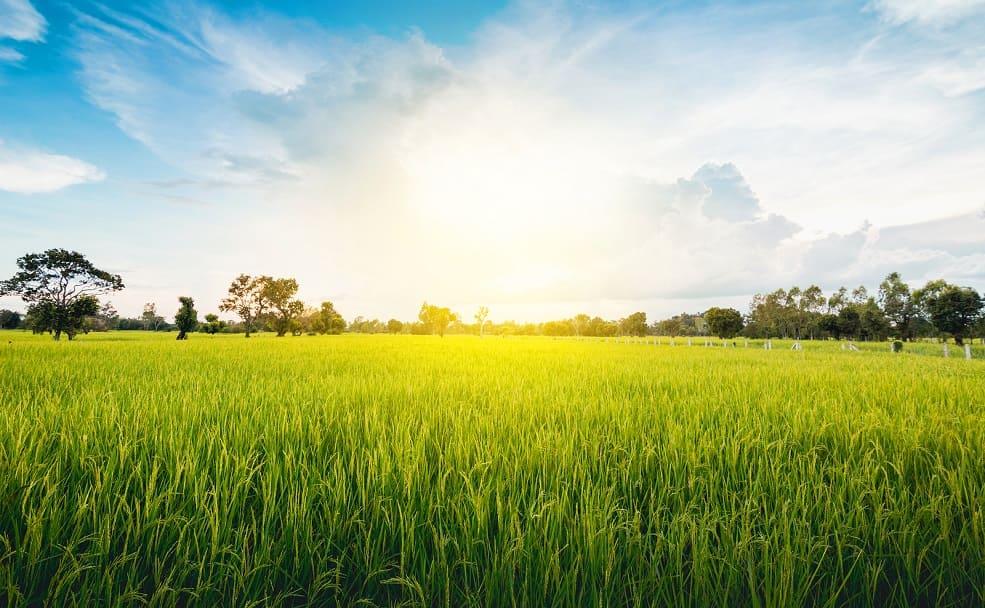 Sonneneinstrahlung auf ein grünes Feld auf dem Land