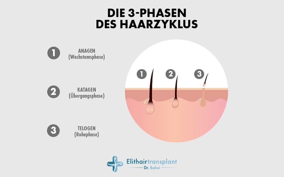 Die drei Phasen des Haarzyklus in einer animierten Grafik erläutert