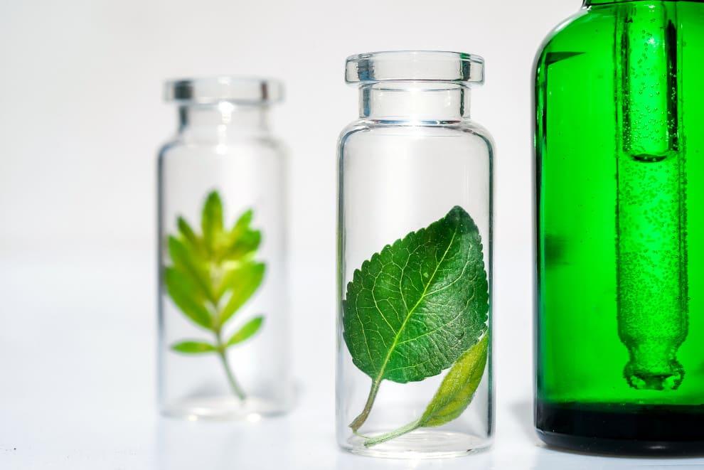 Glasflaschen mit grünen Blättern darin